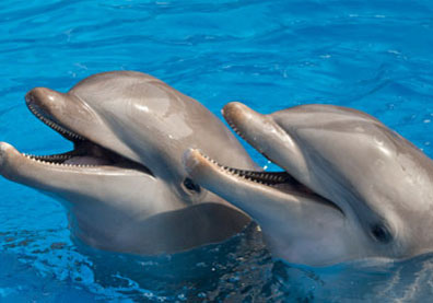 Swim with Dolphins Package at Grand Velas Riviera Maya