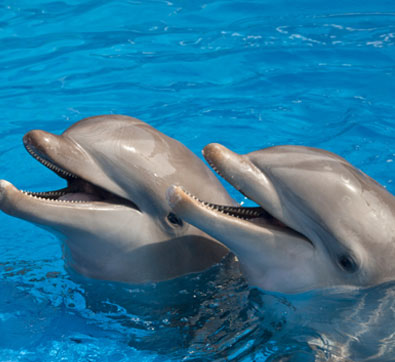 Grand Velas Riviera Maya Swim with Dolphins Package